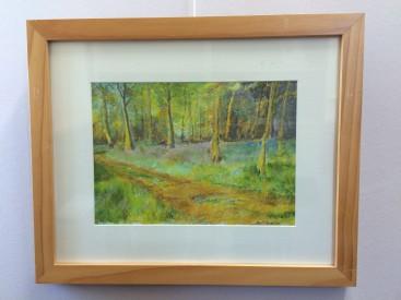 Path through woodland bluebells