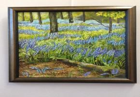 Sunny Bluebelll wood
