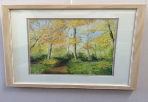 Sunny Autumn Woodland